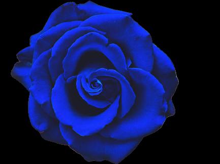 krya på dig blommor blå rosor