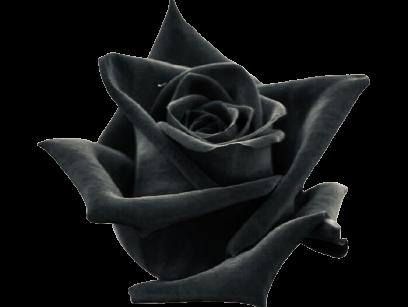 evighetsrosor svarta rosors betydelse